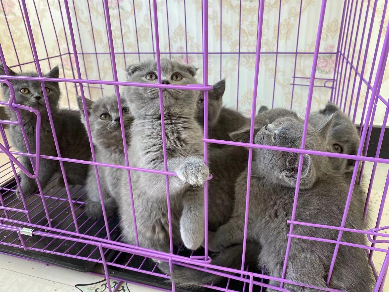出售小蓝猫16633322114