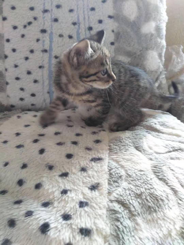 小貓咪兩個月啦!