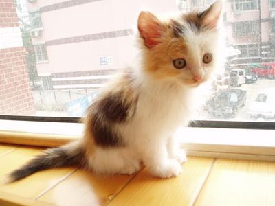 宠物小猫咪