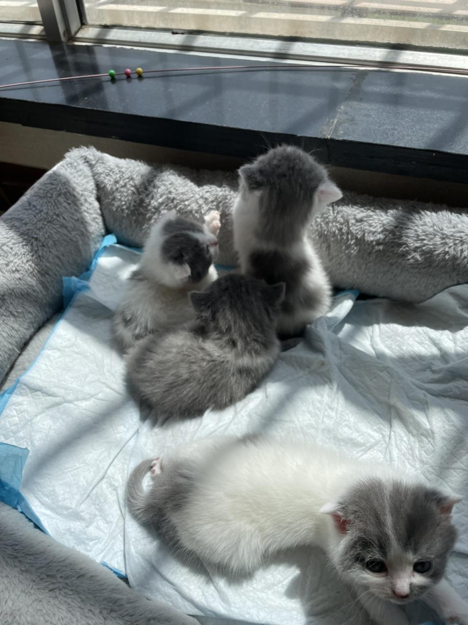 自家貓生的幼崽小貓,有喜歡的嗎?