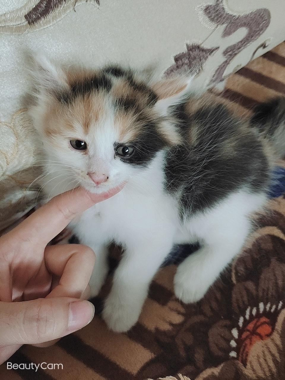 赠送小奶猫