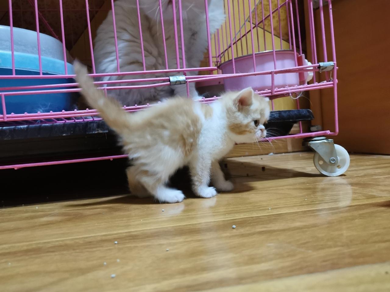 加菲串串,自家奶貓,剛滿月