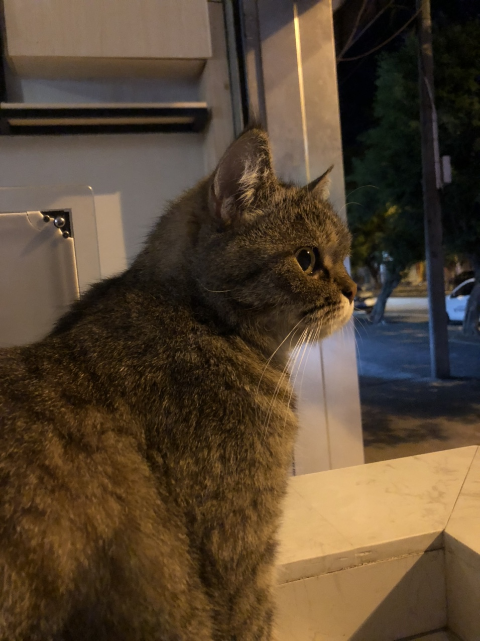 找爱猫人士收养此猫,感谢,