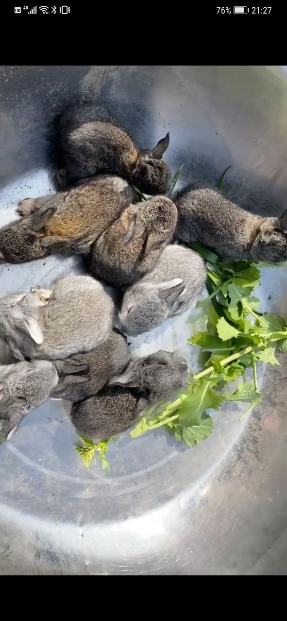 可爱的兔兔