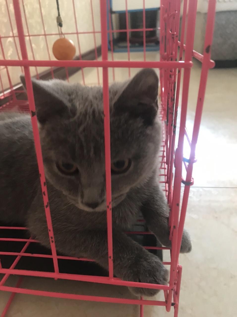 蓝猫淘气三千问