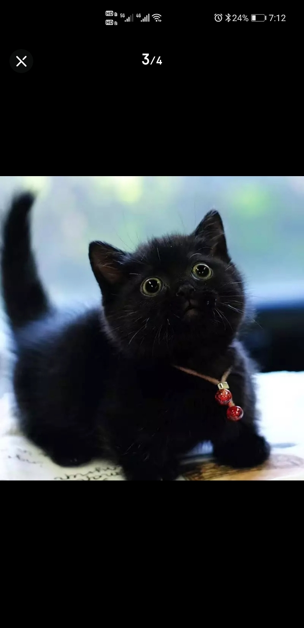 自己养,想养一只纯黑色的猫,不限品种