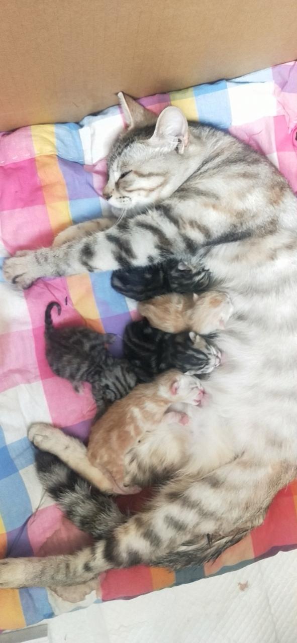 不是所有的貓都是5月20號生的