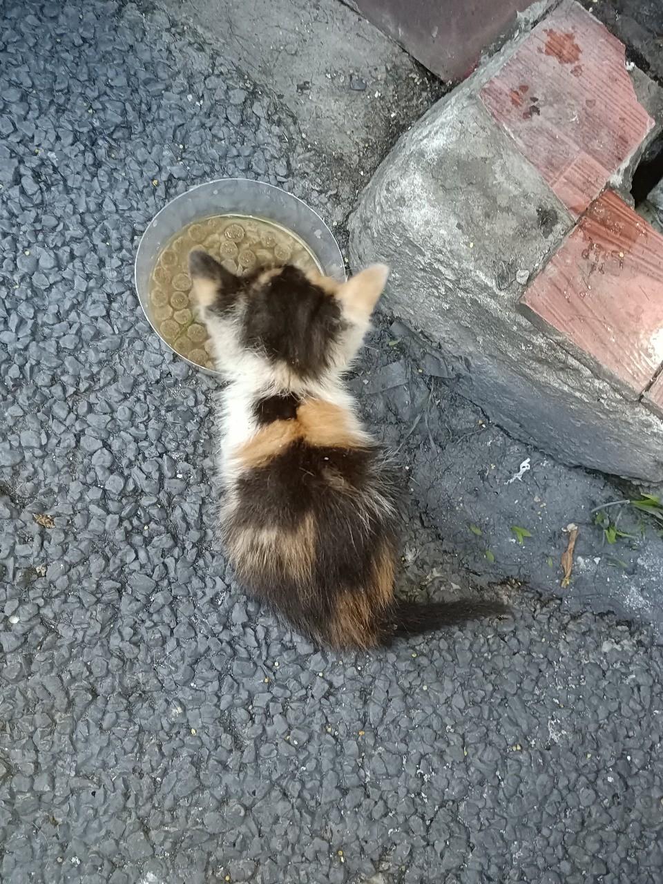 小奶猫求领养
