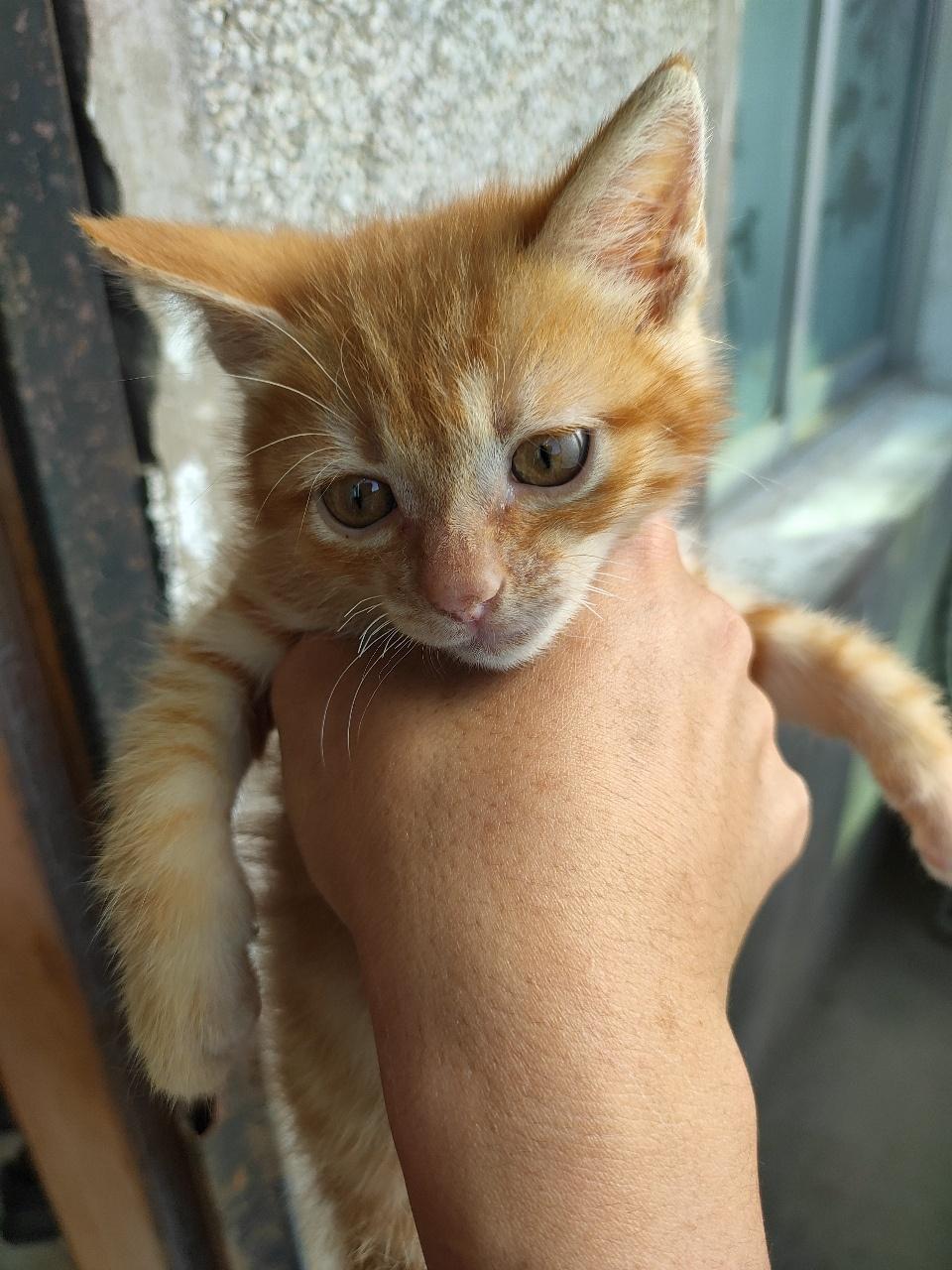 小奶猫有需要爱心家庭领养