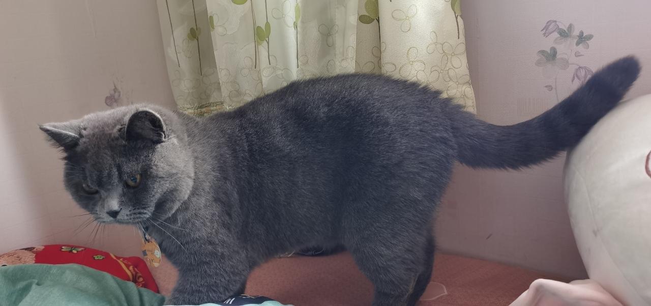 小藍貓爪對象