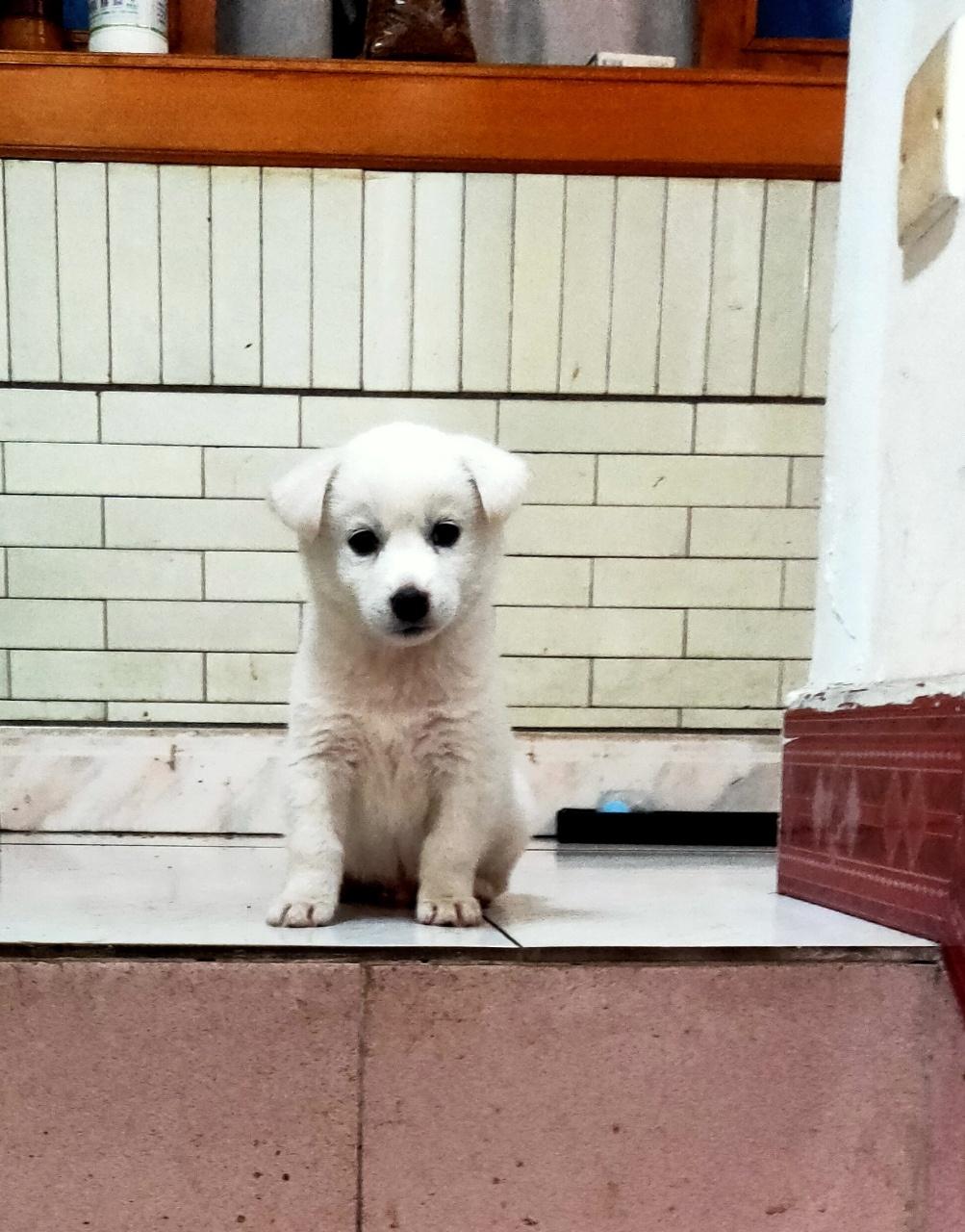 求免费领养,赠送宠物狗