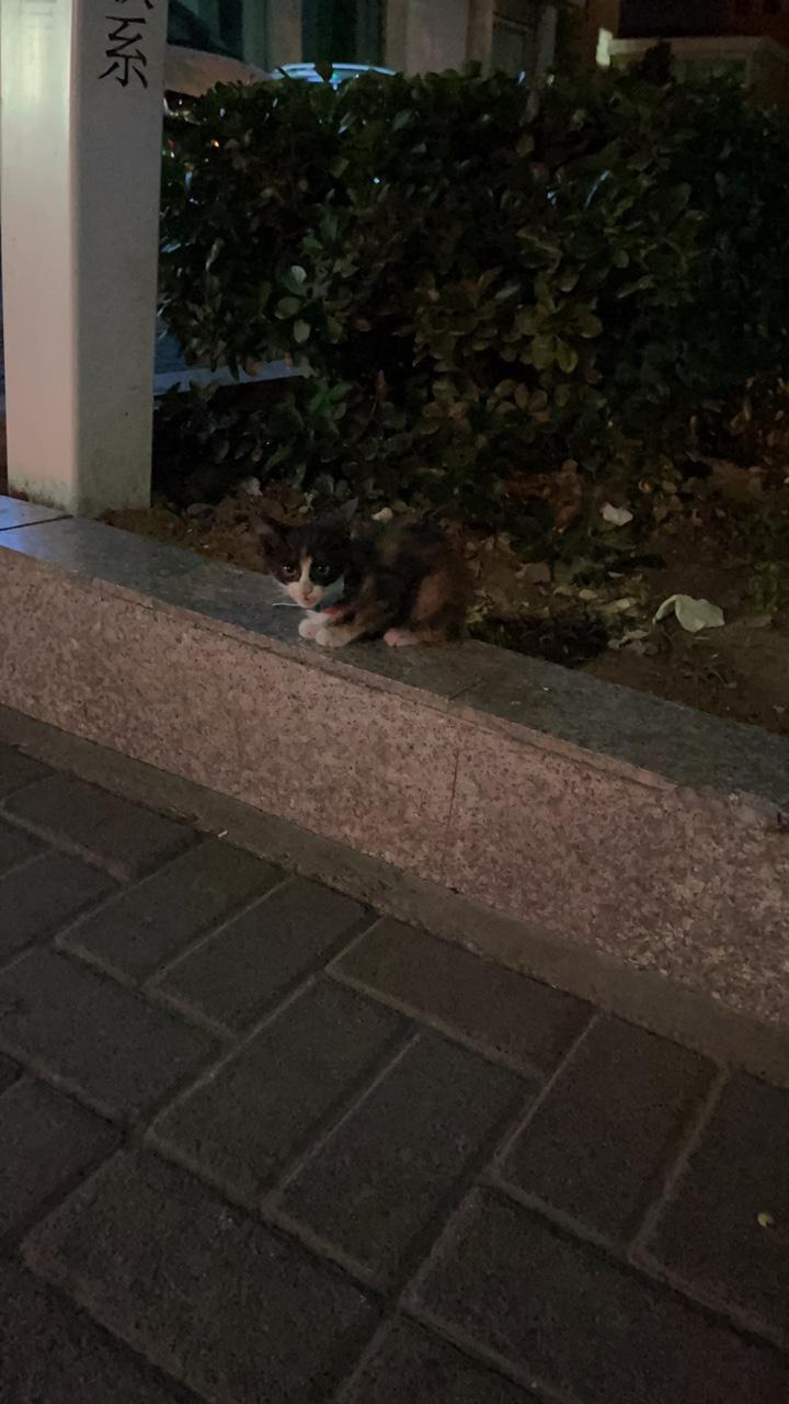 誰家的貓丟了