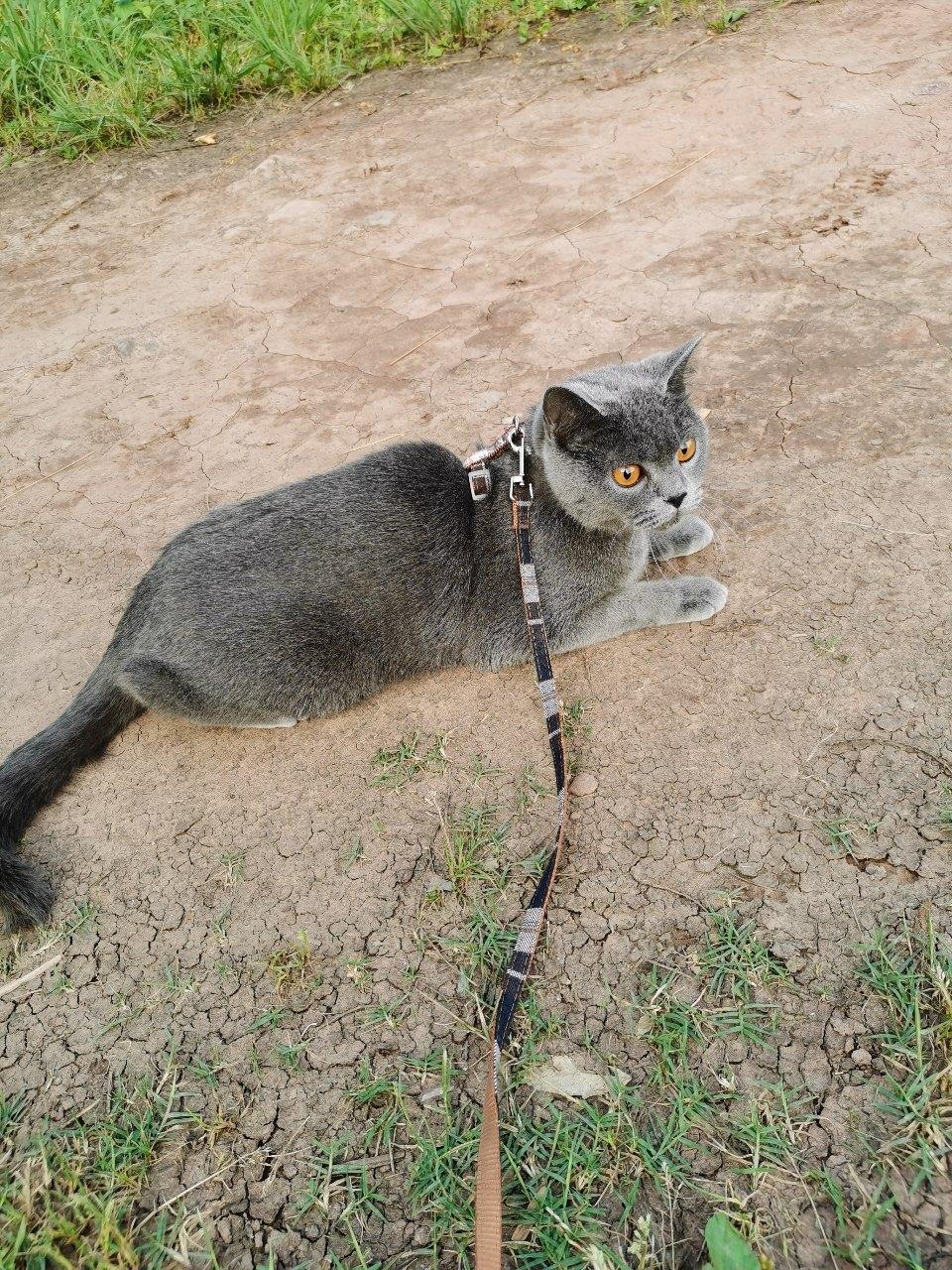 我家猫猫要生了