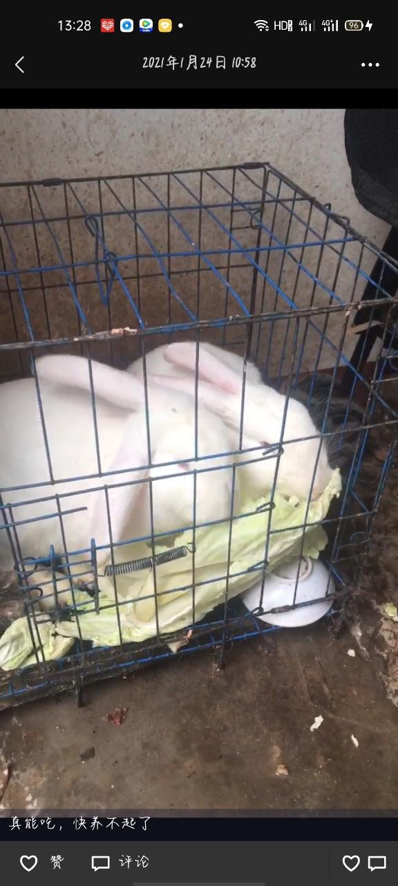 兔子不养了
