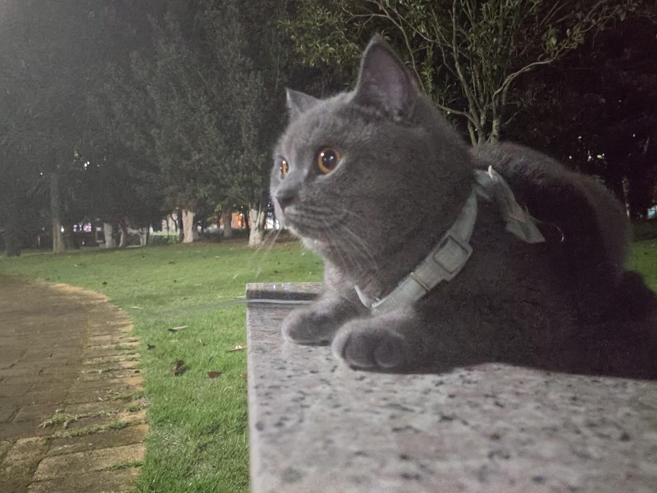 找一只公猫配种