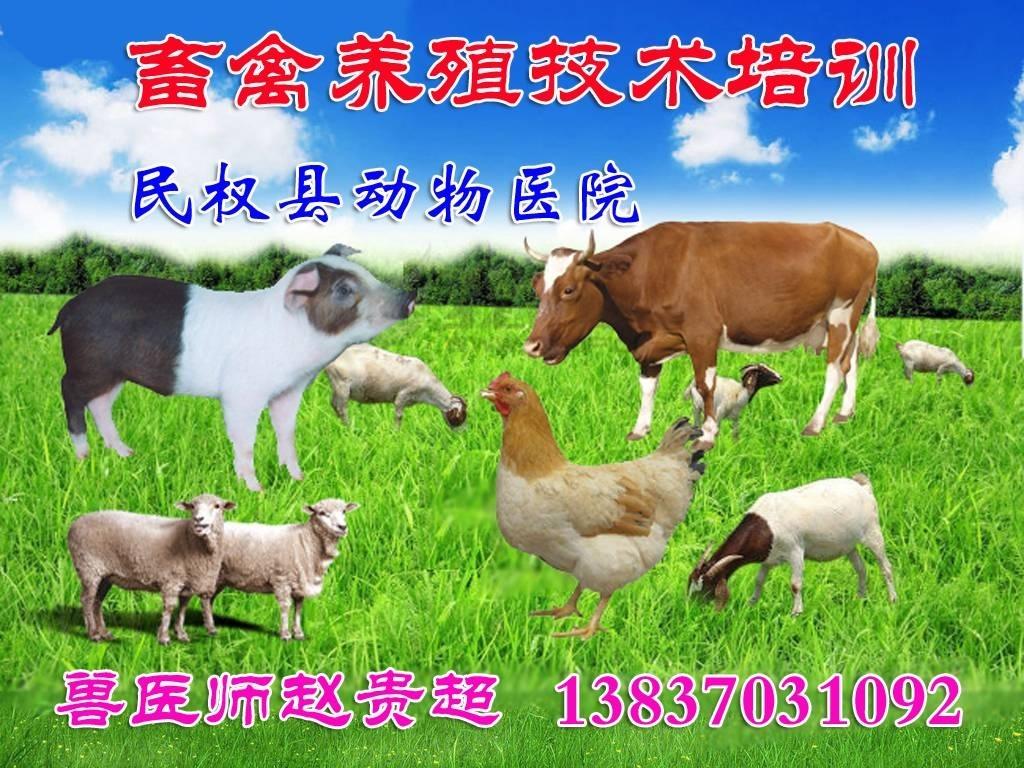 民权县动物医院