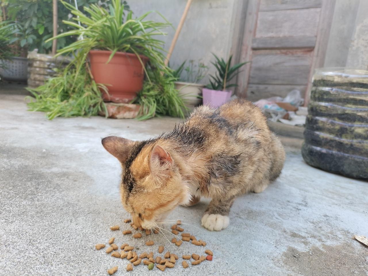 給小花貓找個家