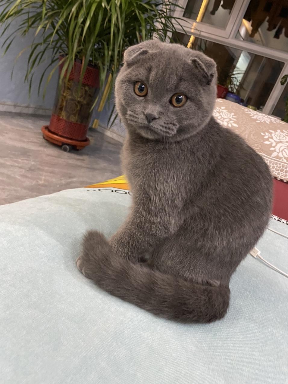 出家養小貓咪