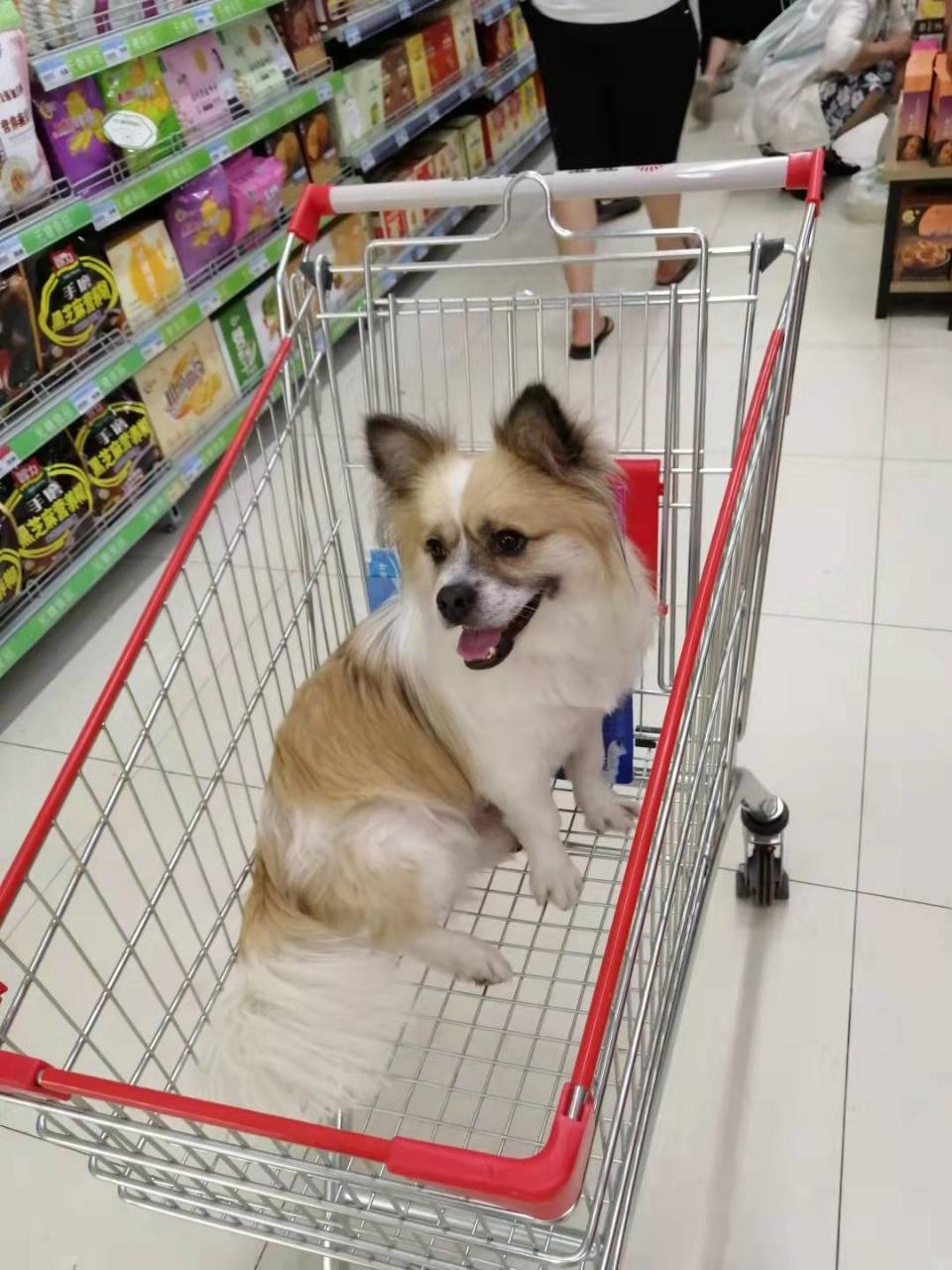 我的狗狗在亚兴亚兴附近走失,如果有见到的