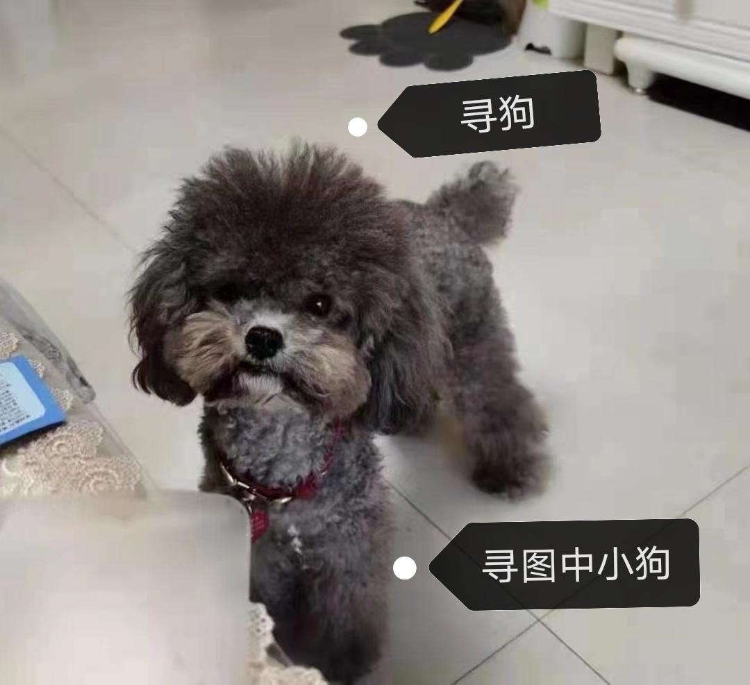 寻图中灰色小狗
