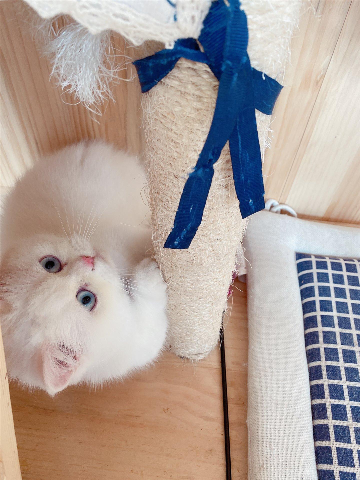 自己養的小貓咪