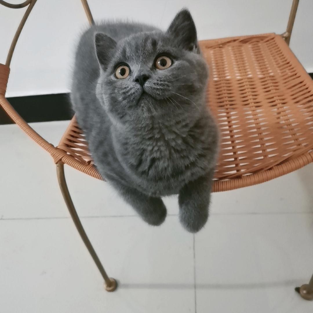 卖猫,找个爱猫人士