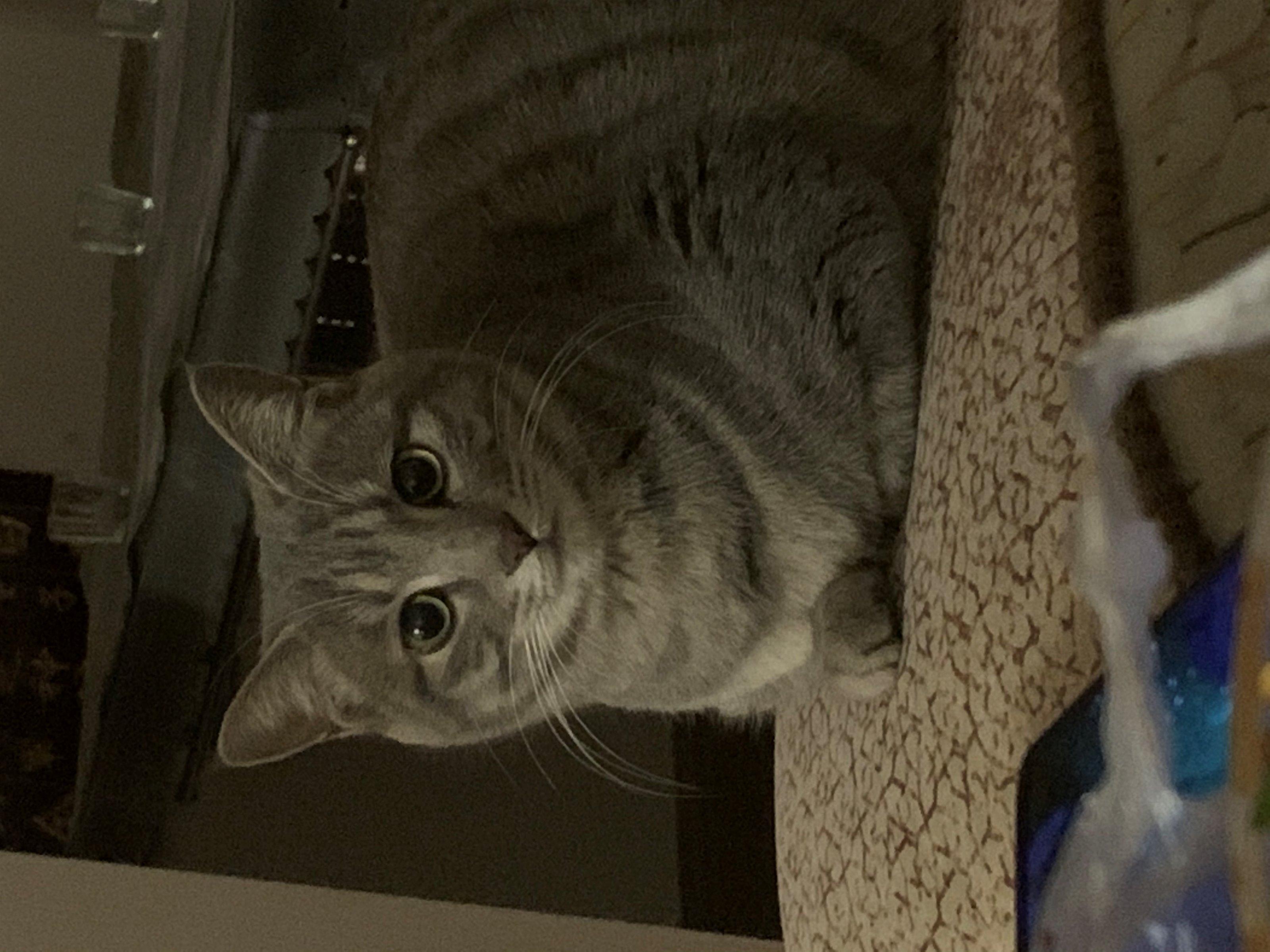 需要領養貓咪的朋友,請致電