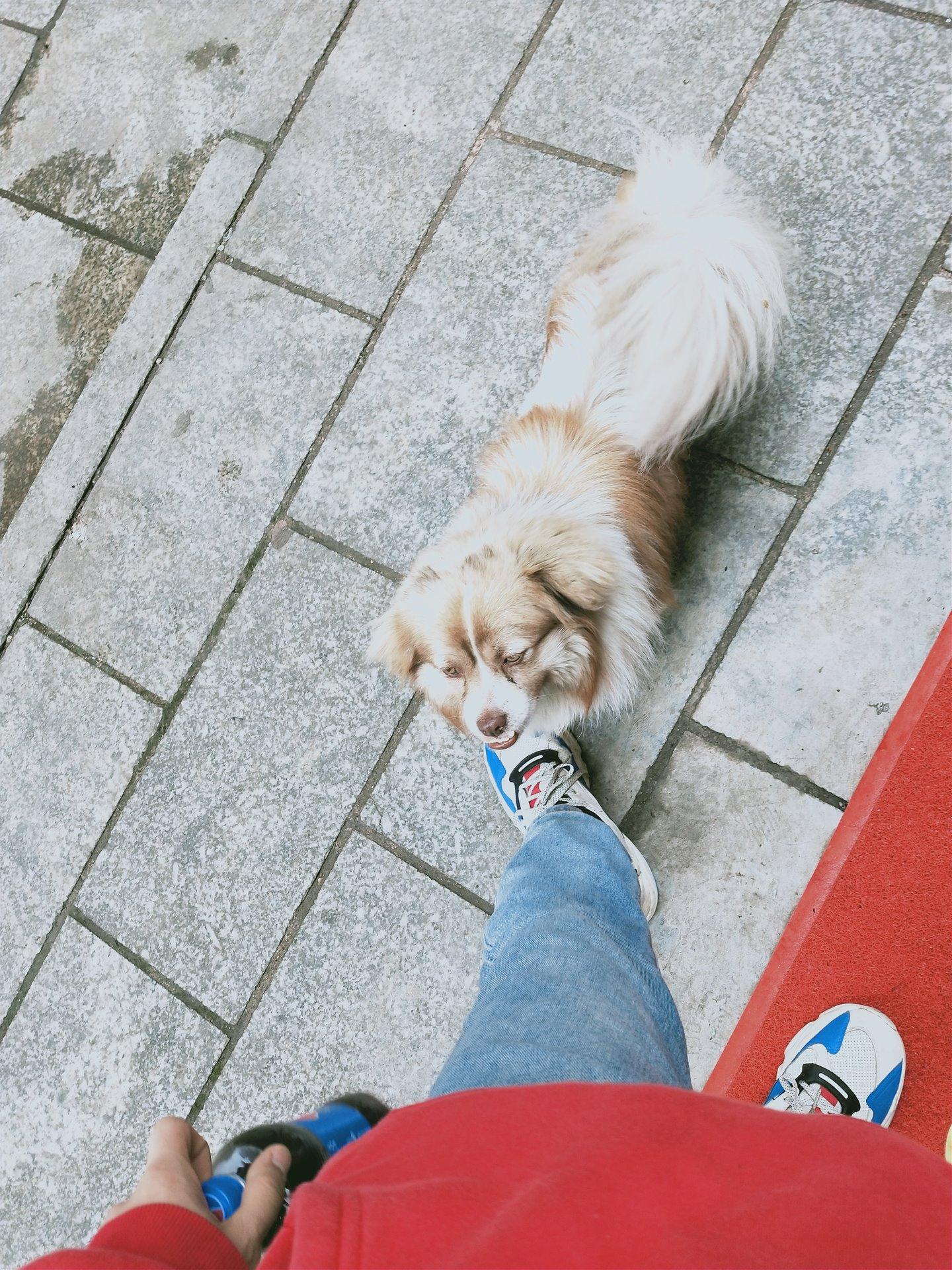 世昌广场  一只没人要的狗