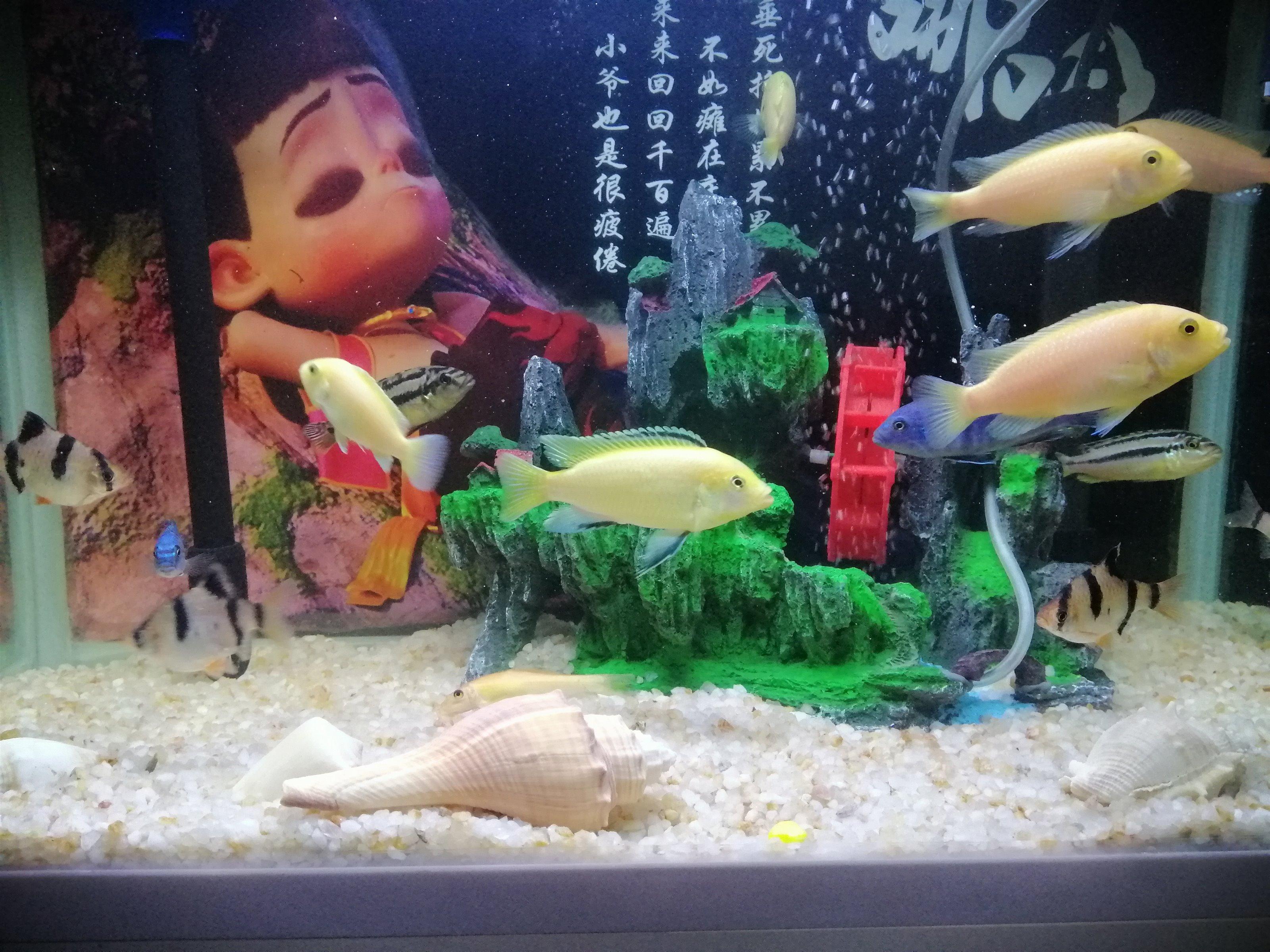 魚缸全套設備帶魚