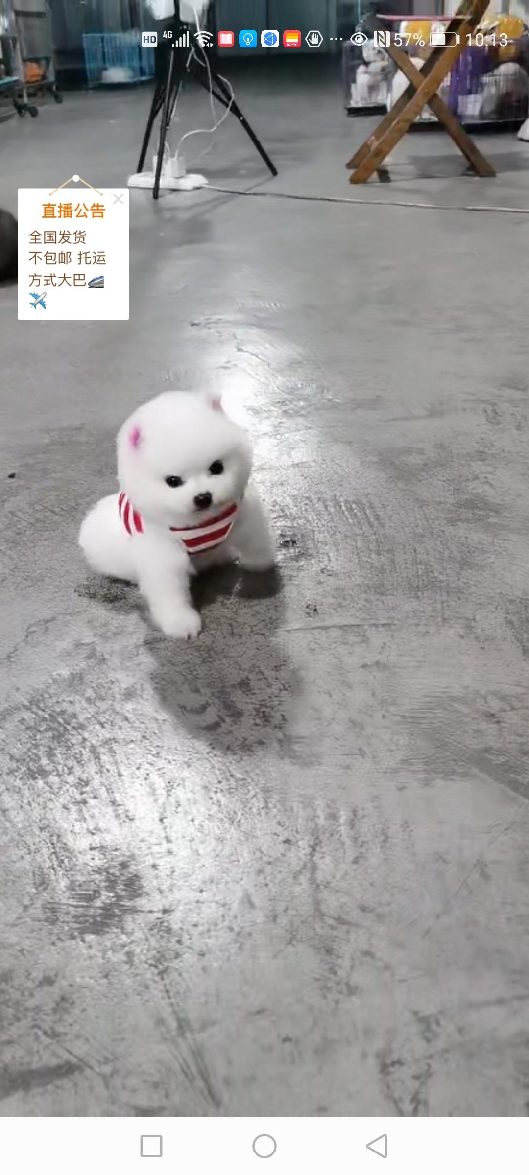 領養寵物狗
