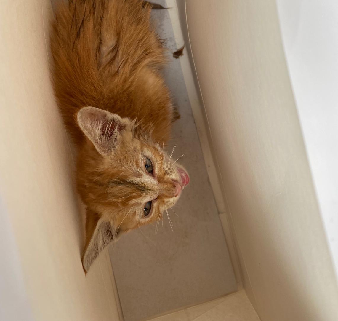 小橘猫领养!!!