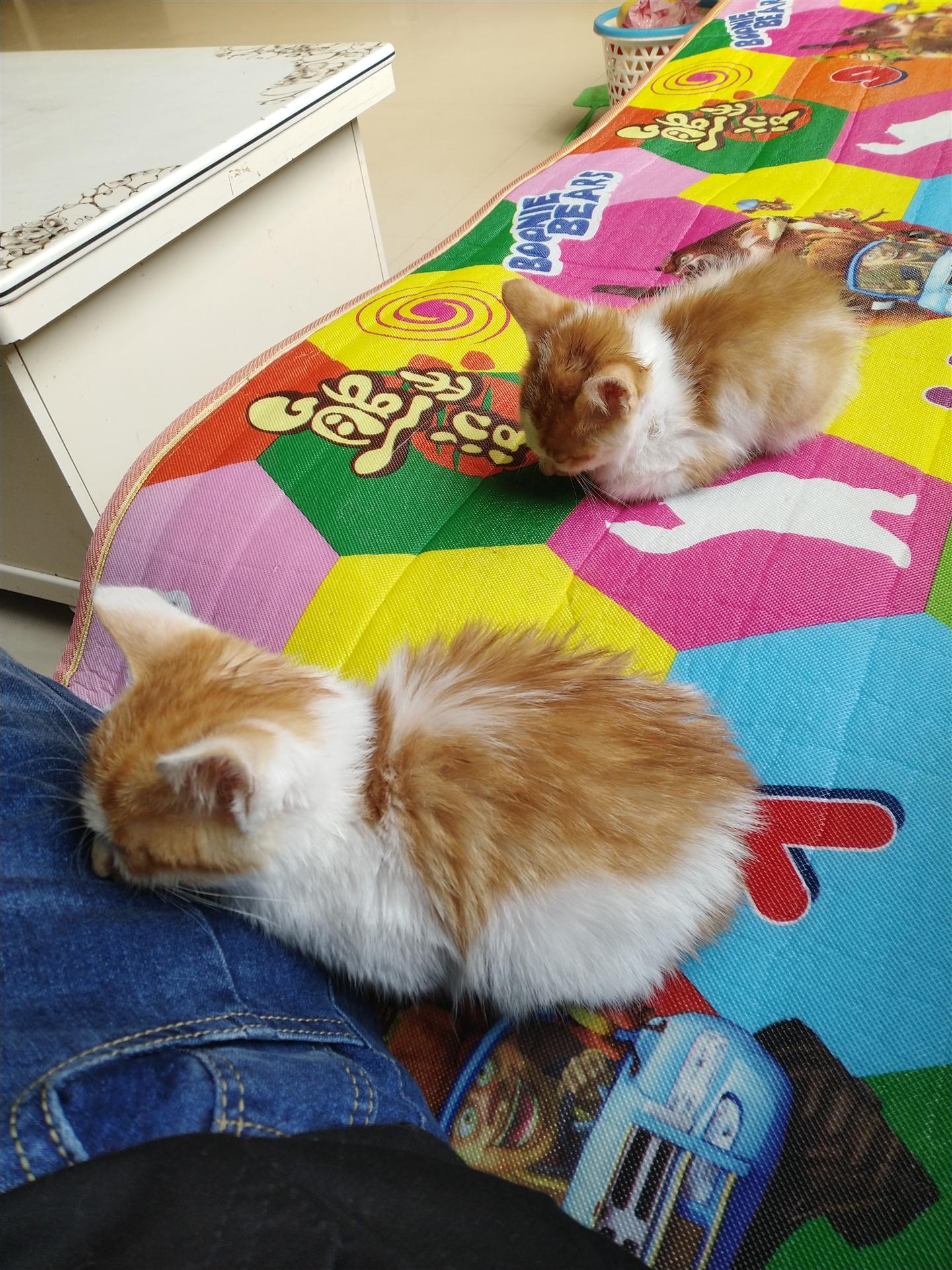 两只小花猫