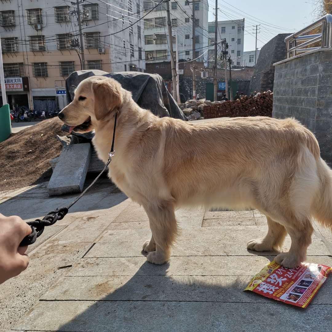 狗狗走丢寻找狗狗