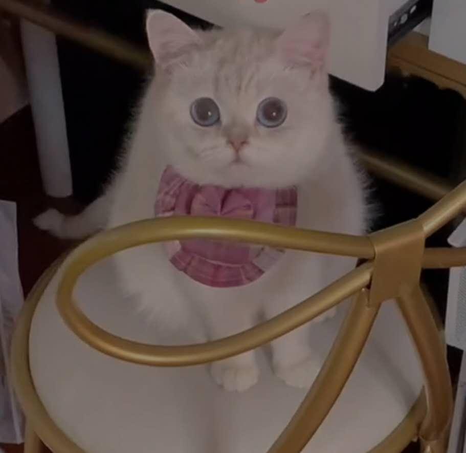 想要領養一只小貓咪