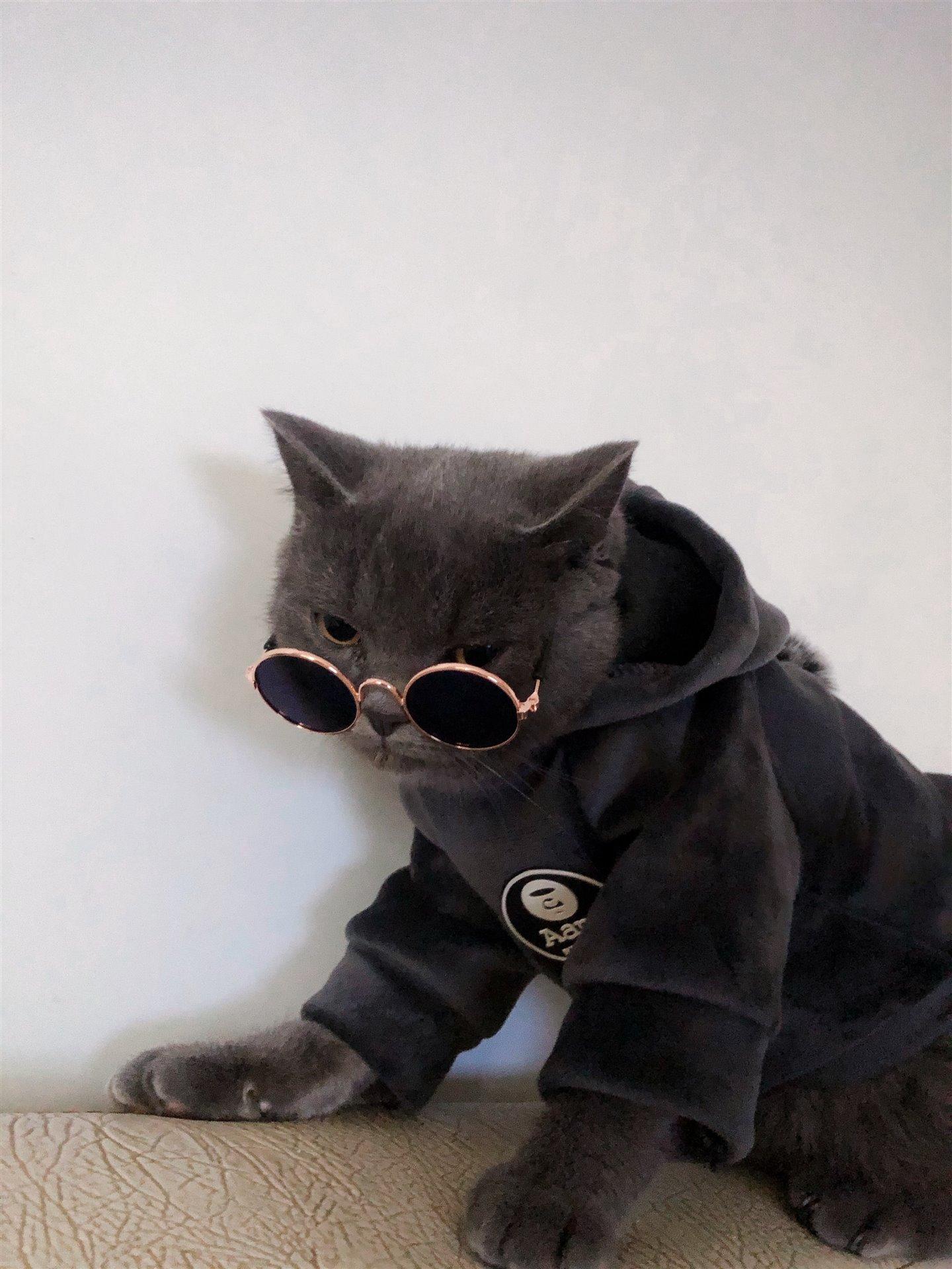 公猫发情找对象