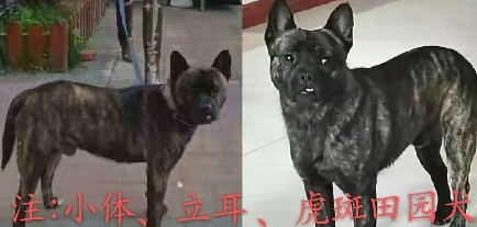 西安来汉旅游一女士丢失爱犬