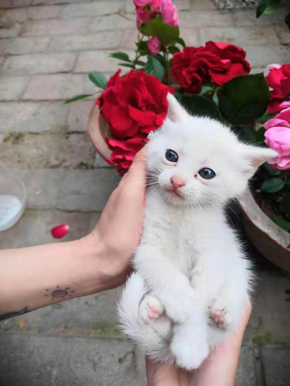 可愛的貓咪