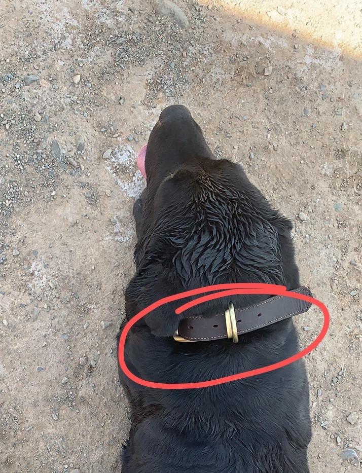昨天狗狗在人工湖跑丢