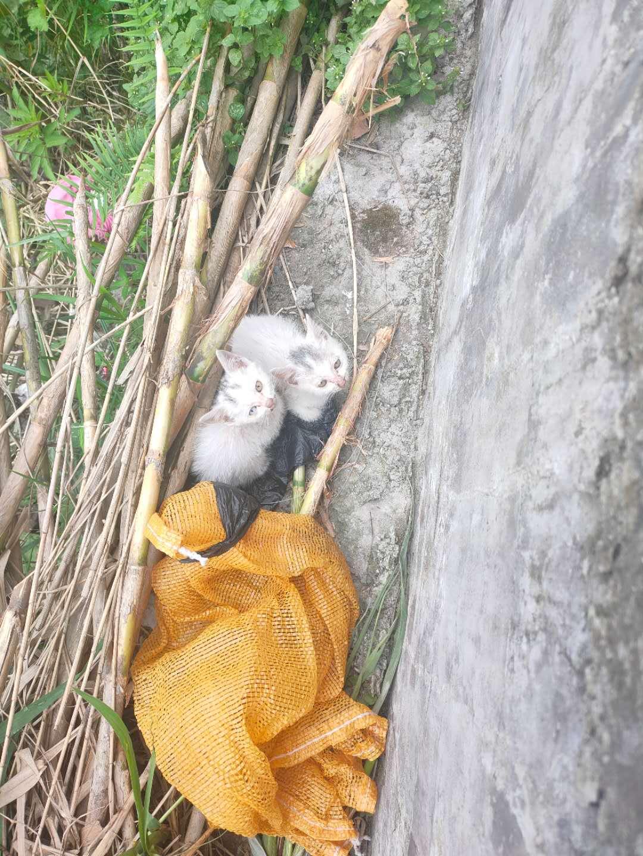今天捡的两只小奶猫,也需要的朋友免费赠送