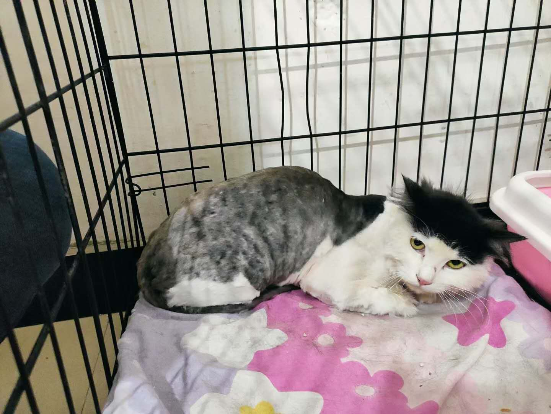 刘海猫找领养