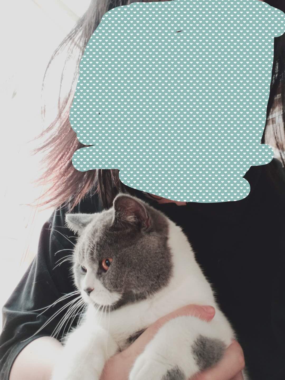 蓝白猫求领养