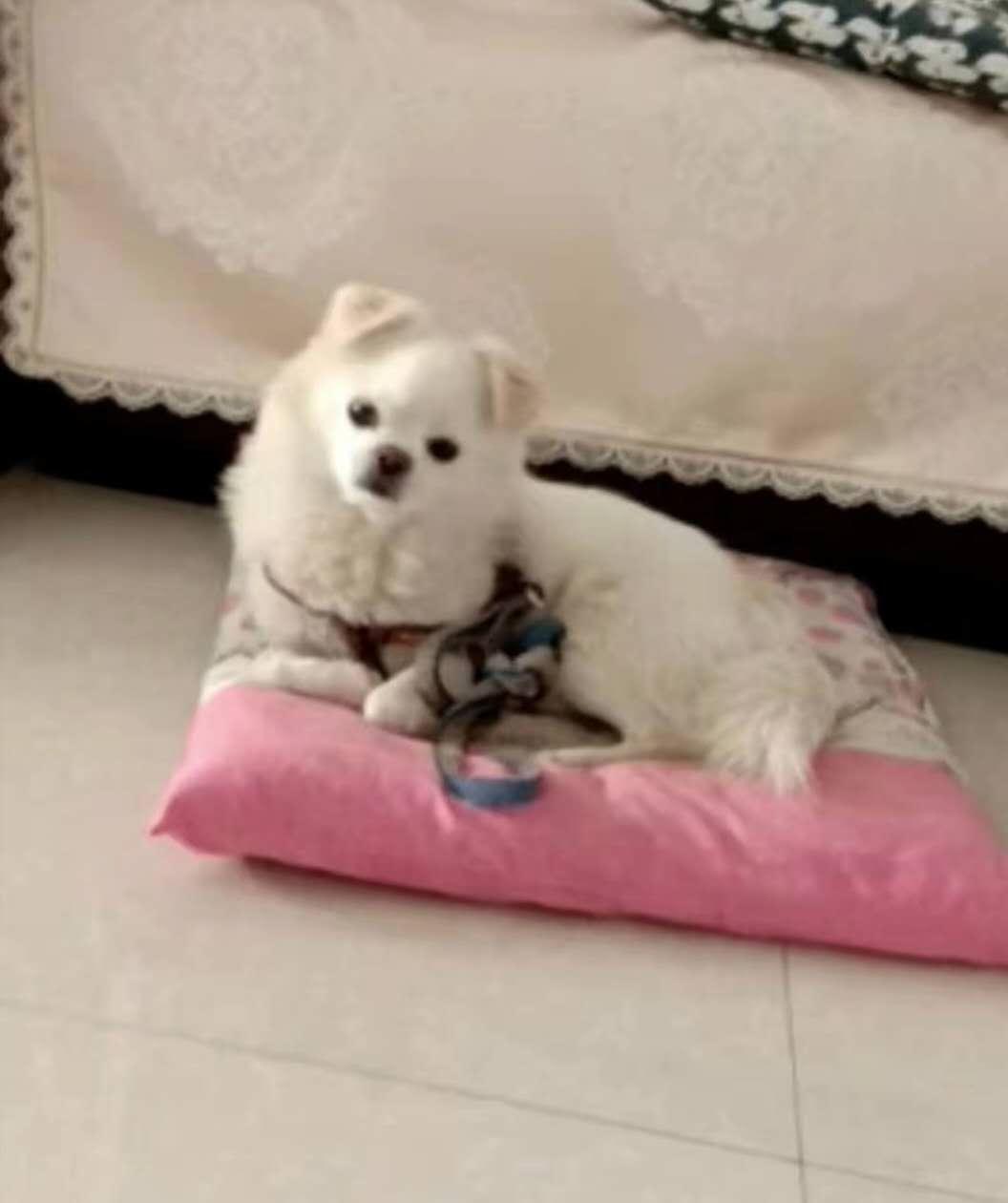 二岁小狗狗