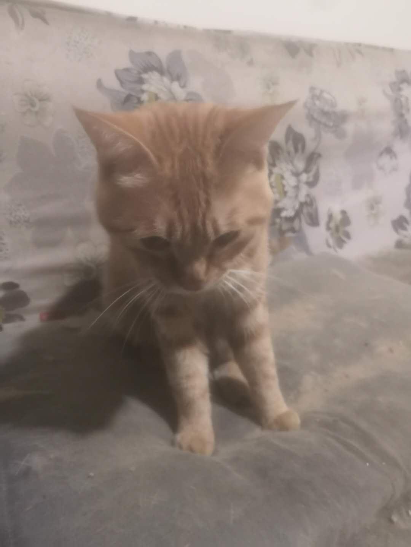 求爱猫人士收养