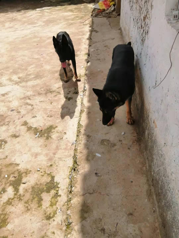 此三狗出售