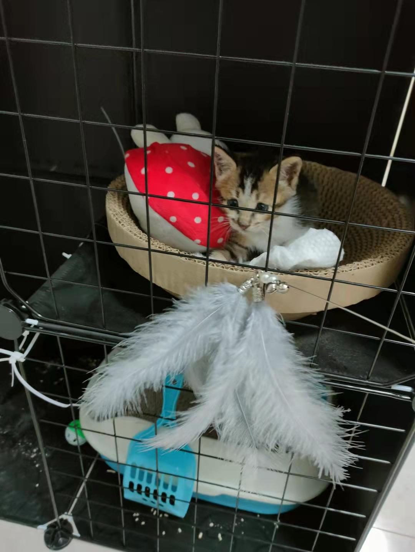 捡到一只小猫,求收养
