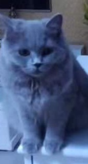蓝猫六个月