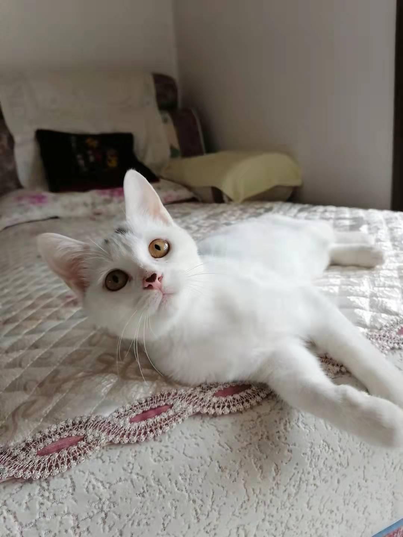 ***养小猫